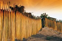 トキヤ草の葉を細く裂いた紐